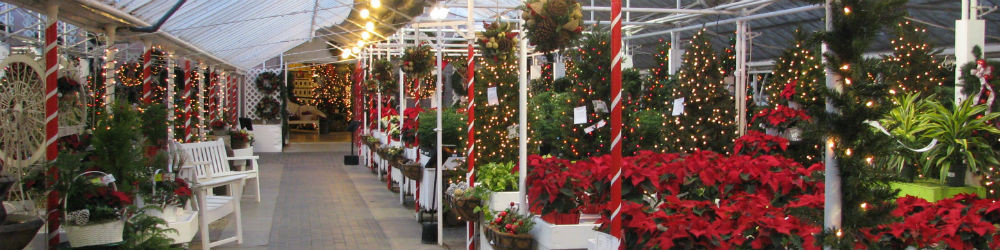 Greenhouse at Christmas