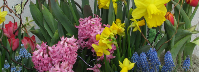 When And How To Plant Bulbs Countryside Flower Shop