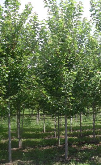 Fertilize Trees Now Countryside Flower Shop Nursery