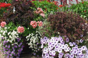 cont gardens