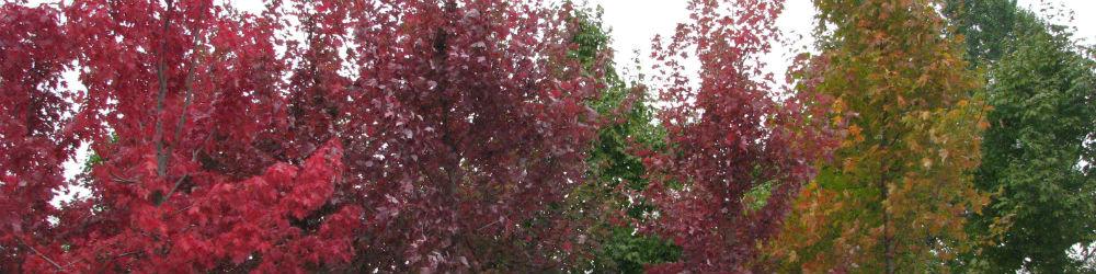 fall-shade-trees
