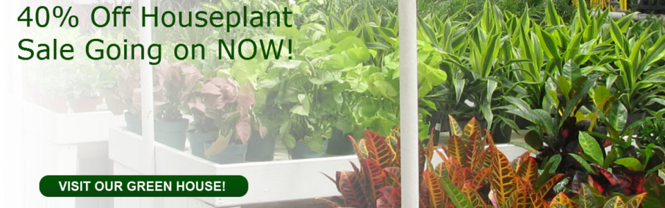 40% Off Houseplants Sale Going on Now click here to learn more