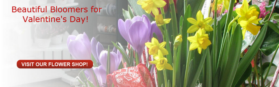 Crystal Lake florist for fresh flowers and blooming plants