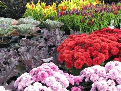Greenhouse Countryside Flower Shop Nursery Amp Garden Center