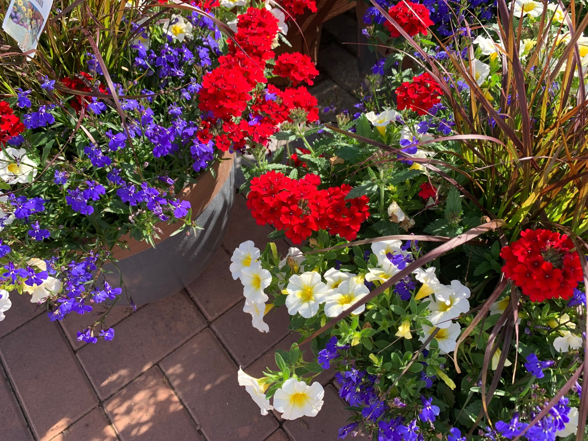 July 2019 Gardening Calendar Countryside Flower Shop